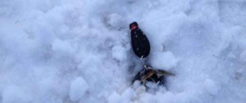 Losing Car Key In The Snow